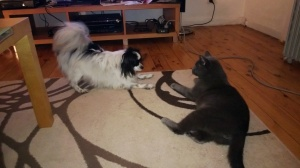 C'mon....just play with me Oska!