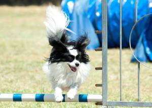 Photo courtesy of Le Hammer: Summer Agility Camp