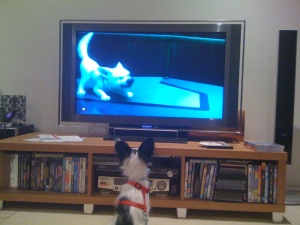 Favourite puppy movie - Bolt!