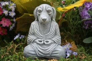 Bhudda dog