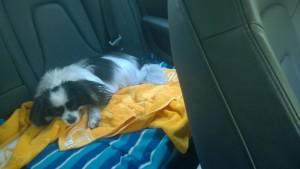 So sleepy. Too hot.